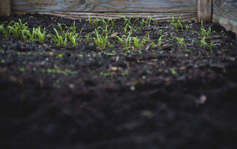 Soil Organic Material Degrading Zombie Deer Disease